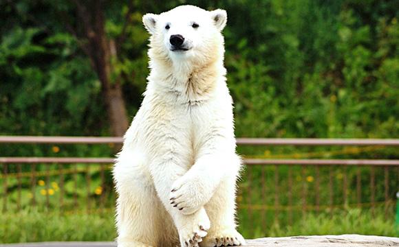 zoo-bear.jpg